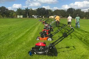 Best Lawn Mower for the Money
